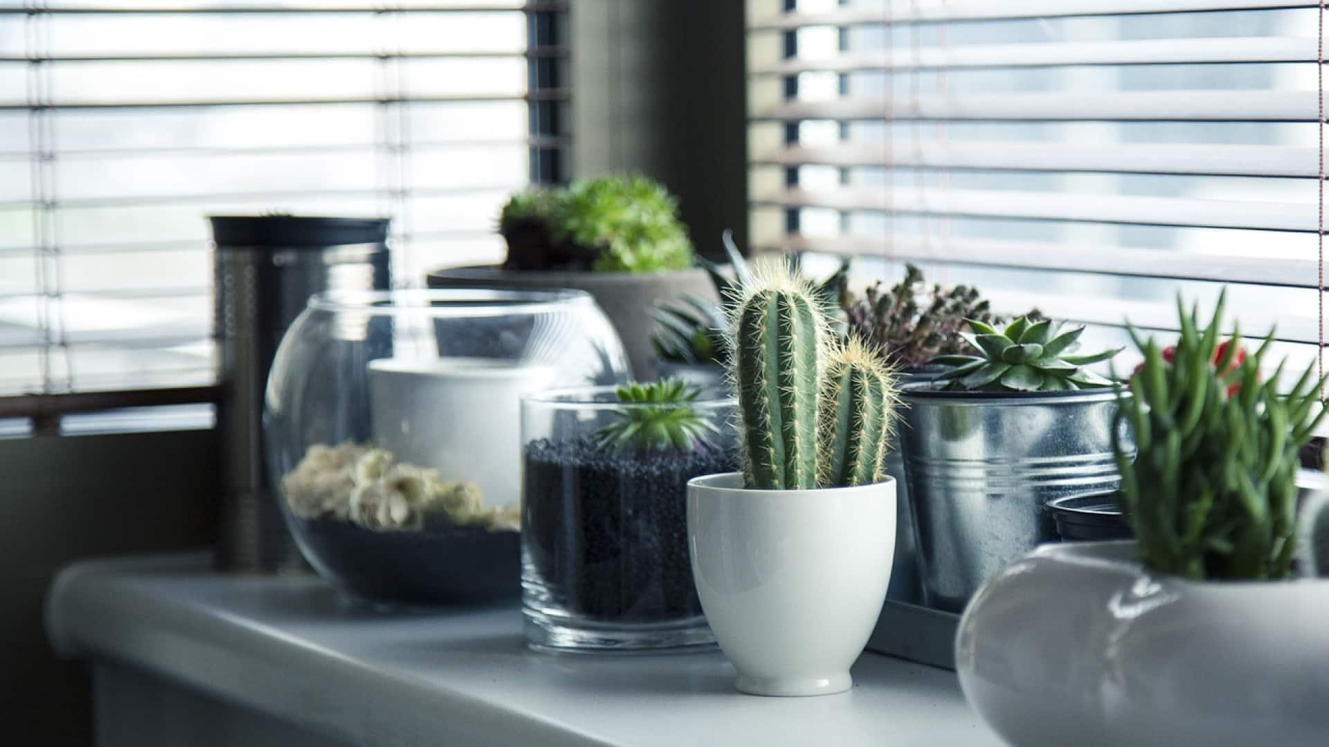 La place des plantes dans une maison